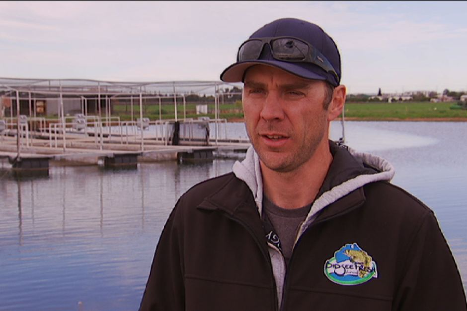 Episode 3: Farming Murray Cod with Mat Ryan image